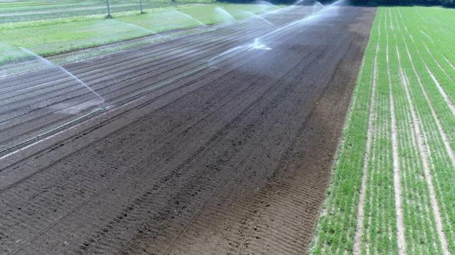 bewässerung von einem kommerziellen gemüsegarten - bewässerungsanlage stock-videos und b-roll-filmmaterial