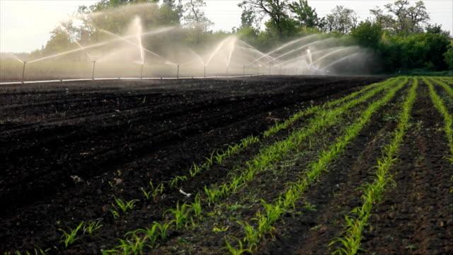 irrigation of the field - värmepump bildbanksvideor och videomaterial från bakom kulisserna