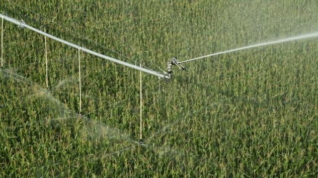 Bewässerung Pivot Sprinkler gießen Cornfield von oben – Video