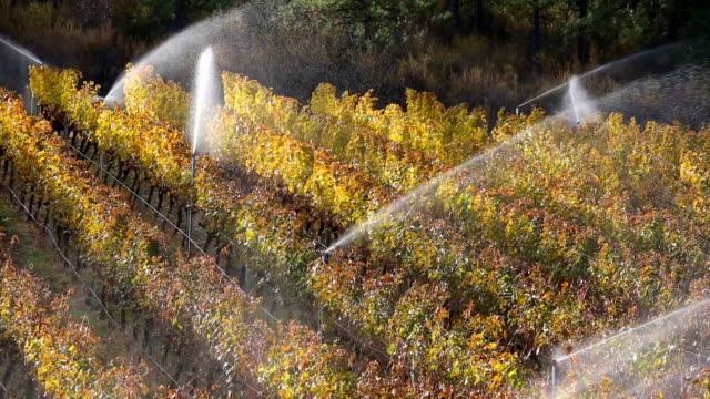 Irrigation Sprinkler Merlot Vineyard Okanagan Valley video