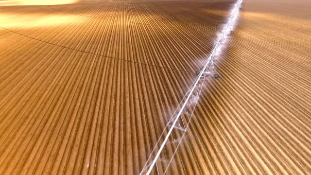 bewässerung sprinkler bauernhof feld essen kulturen landwirtschaft - bewässerungsanlage stock-videos und b-roll-filmmaterial