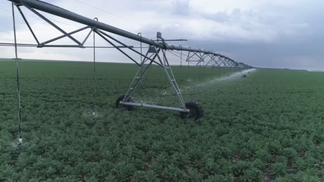 irrigation system in agriculture, green rapeseed crop fields on background of sky
