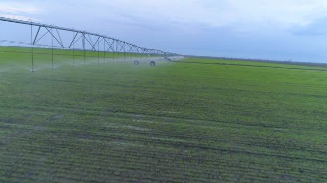 irrigation system watering of agricultural land, aerial view on green rapeseed field and sky