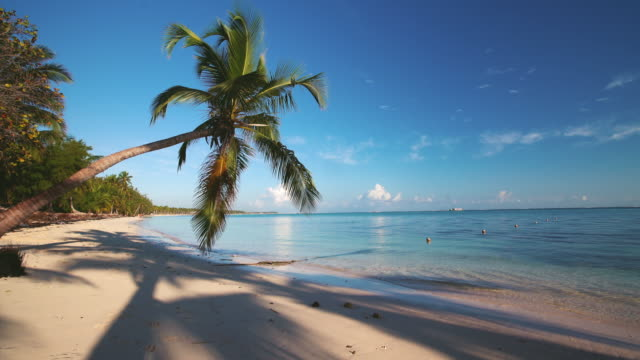 Island tropical beach with white sand, turquoise sea water and coconut palm trees. Punta Cana, Dominican Republic