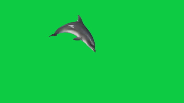 isolated dolphin jumping out of water 4 different angle 3d animation - jedno zwierzę filmów i materiałów b-roll