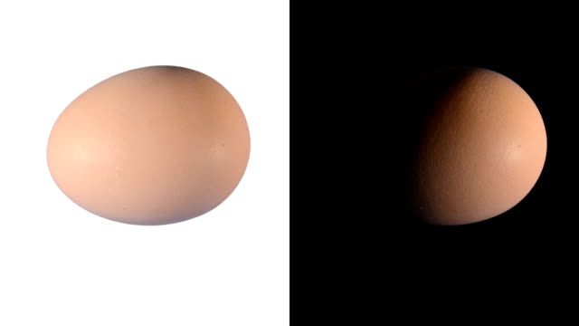 ALPHA: Isolated egg video