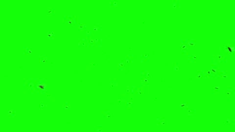 Isolated Fly Swarm 3D animation featuring a swarm of flies flying around over a green background, with sound effects. flying stock videos & royalty-free footage
