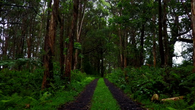 Isolated Forest on Maui Island by Drone video