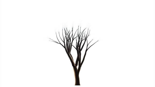 isolato oggetto. crescendo albero su sfondo bianco. - fronda video stock e b–roll