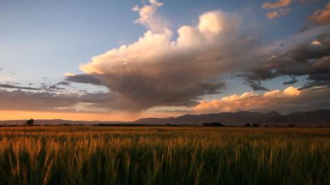 tempesta di pioggia isolate sopra il campo di grano al tramonto - composizione orizzontale video stock e b–roll