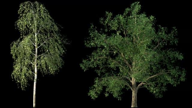 vídeos de stock e filmes b-roll de isolated trees on black - oscilar