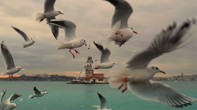 Istanbul Bosphorus Seagull and Maiden's Tower in Istanbul Bosphorus. Slow motion 120f turkey stock videos & royalty-free footage