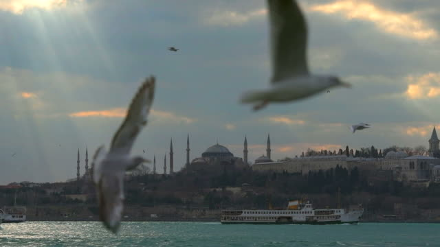 Istanbul Bosphorus Seagull in Istanbul Bosphorus. Slow motion 120ps istanbul stock videos & royalty-free footage
