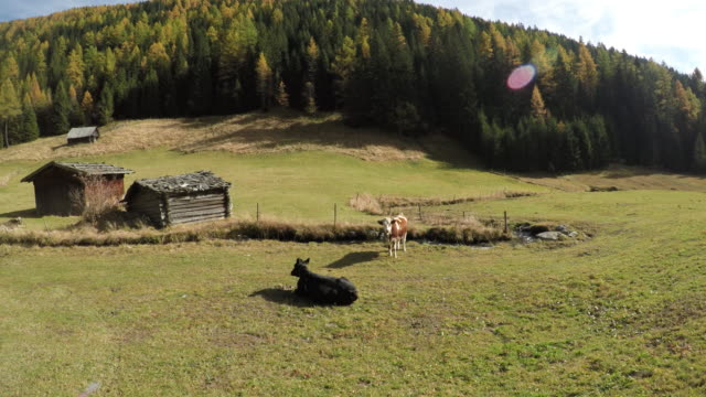 italian mountain landscape with cows river and house in trentino alto adige 03 video