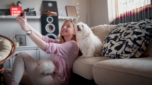 vídeos de stock e filmes b-roll de it's selfie time! - pets