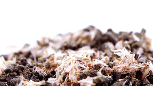 Ivan tea with pine cones video