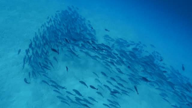 vídeos y material grabado en eventos de stock de peces gato escolaridad sobre el terreno submarinos - sea life park