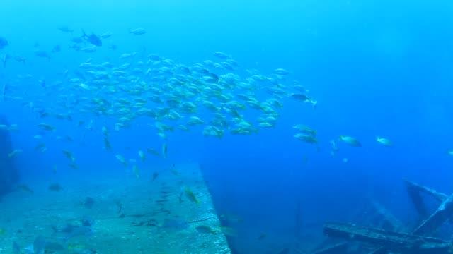 jack fish - луциан стоковые видео и кадры b-roll