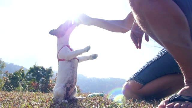 """jack russell terrier suonano all """" aperto con proprietario. rallentatore - gatto dal pelo corto video stock e b–roll"""