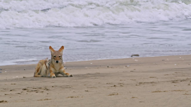 MS Jackal laying on ocean beach,Namibia,Africa