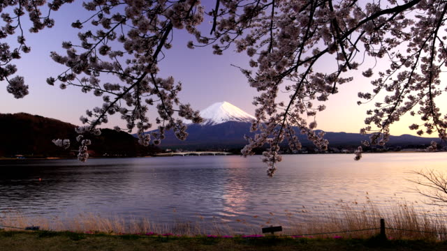 japan beautiful landscape mountain fuji with cherry blossom sakura - cherry blossom stock videos and b-roll footage