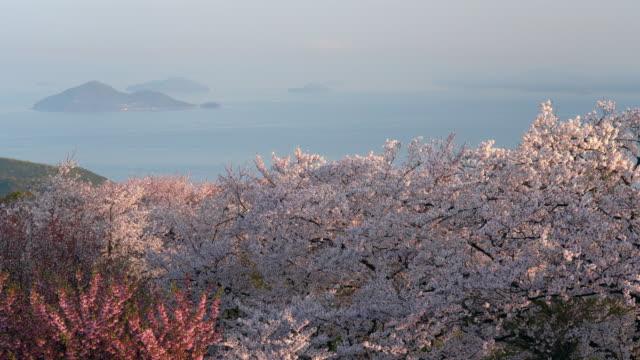 japan kirschblüte - vier jahreszeiten stock-videos und b-roll-filmmaterial