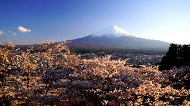 stockvideo's en b-roll-footage met japan landschap met berg fuji en kersenbloesem sakura - japan