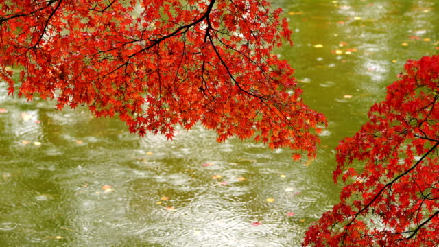Japanese Garden in Fall Colours