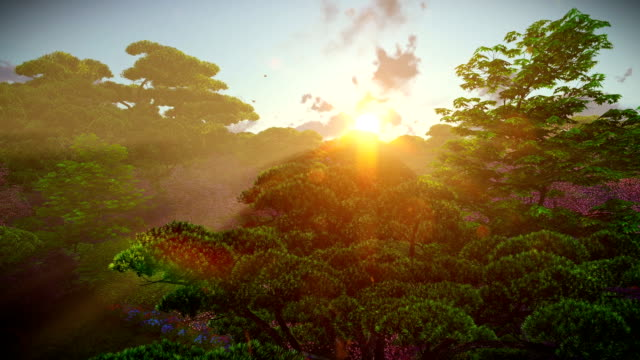 Japanese garden in spring, sun shining between trees, sunset, aerial view video