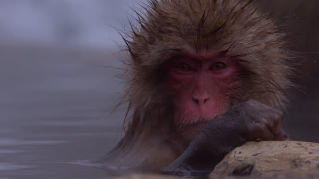 vidéos et rushes de macaque japonais ou singe japonais de neige avec onsen au parc de singe de neige ou jigokudani yaen-koen dans nagano, japon pendant la vidéo de stock de saison d'hiver - prendre un bain