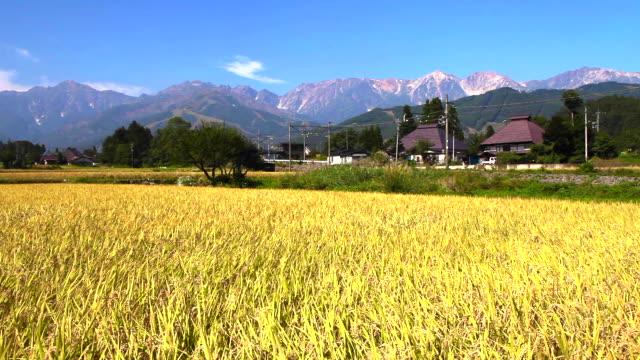日本の風景 - 水田点の映像素材/bロール
