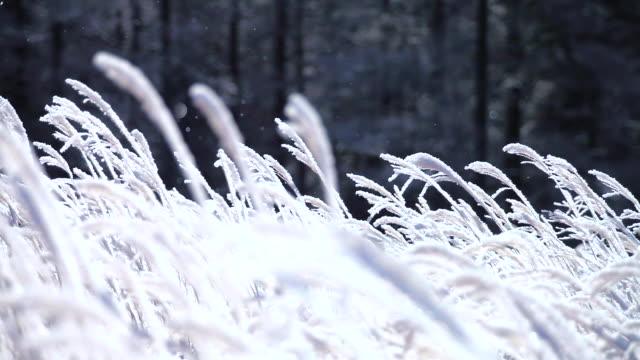 日本の風景 - 冬点の映像素材/bロール