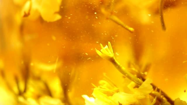 jasmine tea. - jasmin stock-videos und b-roll-filmmaterial