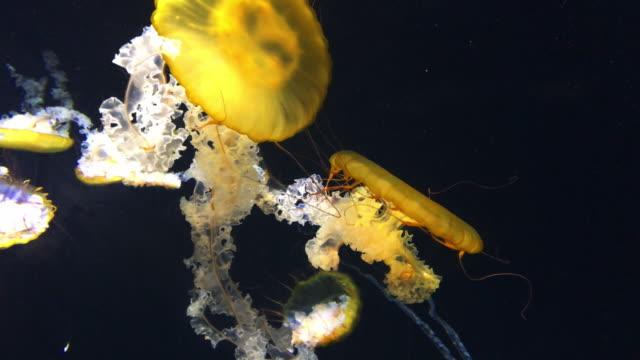 jelly fish floating on black  background