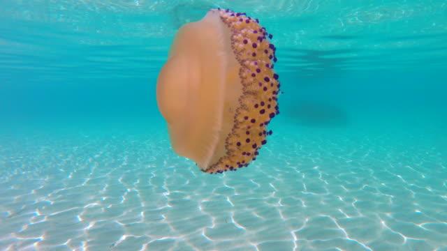 クラ ゲの浮遊とギリシャのエーゲ海で泳いで - 有害物質点の映像素材/bロール