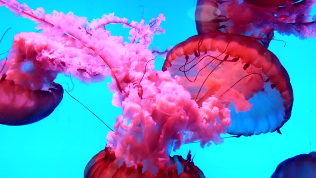 Jellyfish Underwater Jellyfish Underwater fish stock videos & royalty-free footage