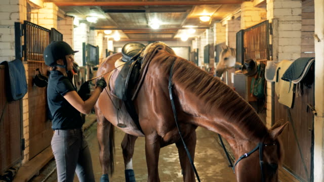 woman horse sex