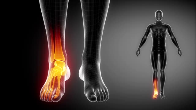 ANKLE joint anatomy 3 cocnept ankle stock videos & royalty-free footage
