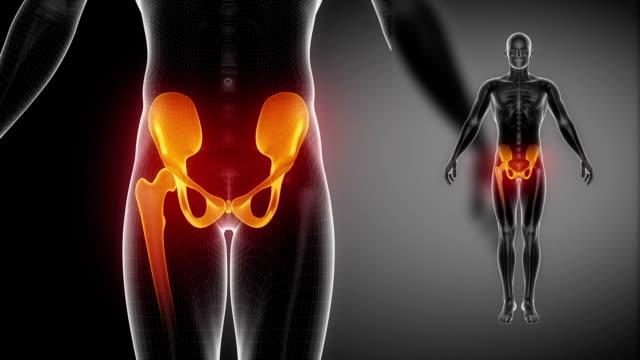 hüfte knochen-skelett x-ray scan in schwarz - hüfte stock-videos und b-roll-filmmaterial