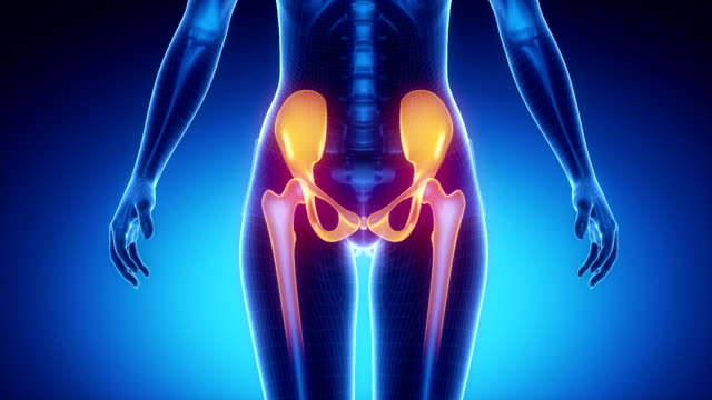 HIP joint bone skeleton x-ray scan in blue