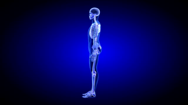 Joint Pain. Blue Human Anatomy Body 3D Scan render - rotating seamless loop video