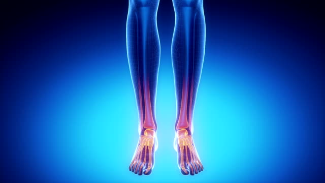 ANKLE joint skeleton x-ray scan in blue 3D anatomy concept ankle stock videos & royalty-free footage