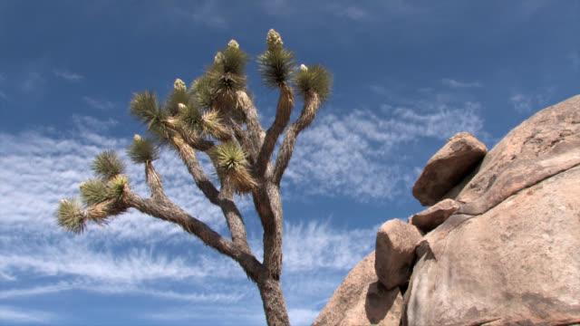 Joshua Tree and Granite Time Lapse video