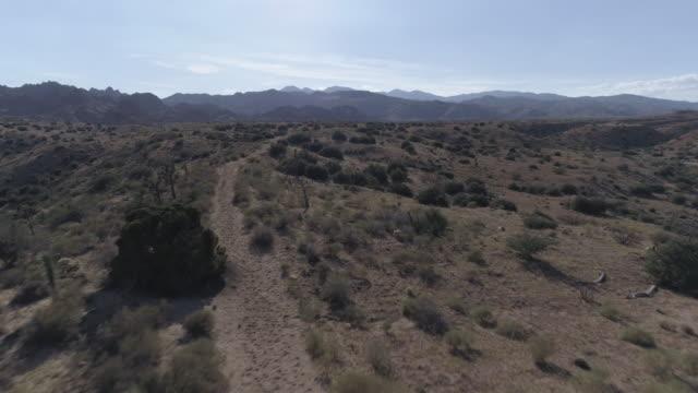 ジョシュア ツリー砂漠航空 - ジョシュアツリー国立公園点の映像素材/bロール
