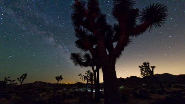 ジョシュアツリー国立公園の夜景。4 k . - ジョシュアツリー国立公園点の映像素材/bロール