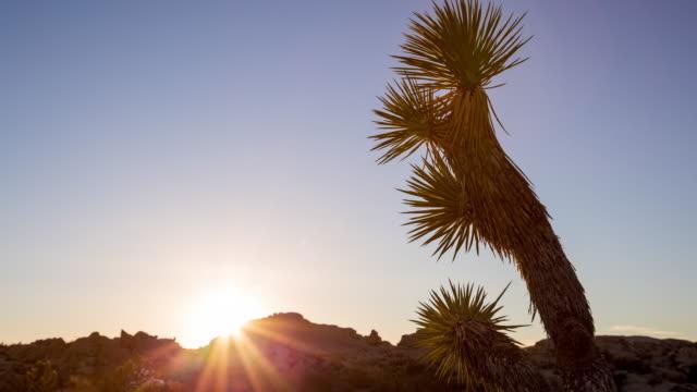 Joshua Tree National Park Desert Sunset video