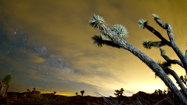 Joshua Tree National Park Joshua Tree at Night. Time Lapse. mojave desert stock videos & royalty-free footage