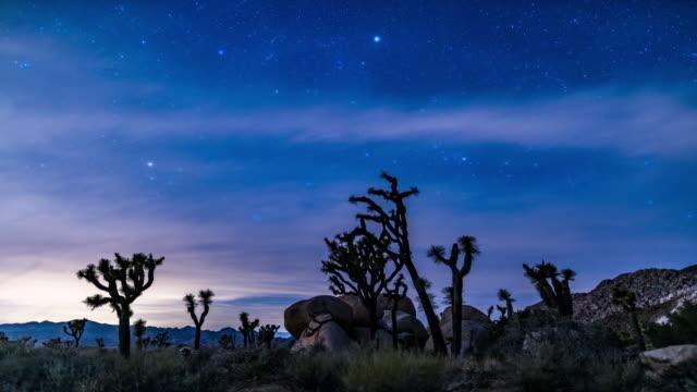 Joshua tree stars time lapse 4K video