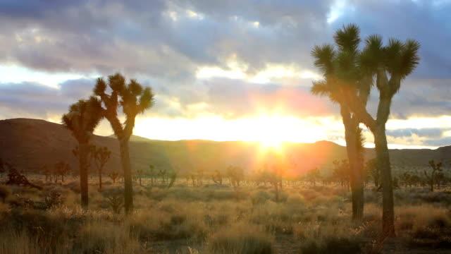 Joshua Tree, time lapse video