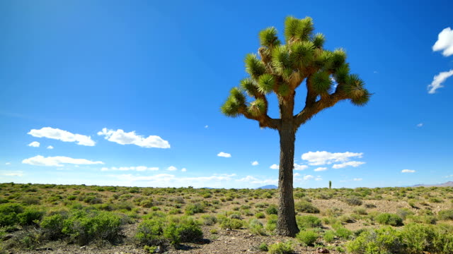 Joshua Tree Joshua Tree time lapse 4K mojave desert stock videos & royalty-free footage